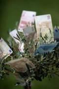 Zins wichtiger als ökologischer Aspekt bei der Geldanlage