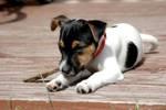 Auch Hunde werden mal krank – Hundekrankenversicherung © tierversicherung.biz